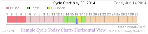 Cycle Today Chart - Timeline showing period, fertile days, follicular and luteal phases (Sample Horizontal View)
