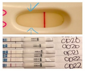 Pregnancy Test 2161 First Response Early